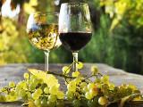 Absolute Lazio Wine Tasting